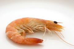 大虾 免版税库存图片