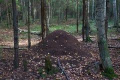 大蚁丘在森林里 免版税库存图片