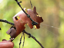 大蜘蛛睡眠 免版税图库摄影