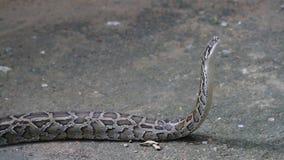 大蟒蛇 股票录像