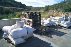 大袋在木板台的橄榄在收获的季节的油工厂 免版税库存照片