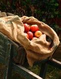 大袋在独轮车的苹果 免版税库存照片