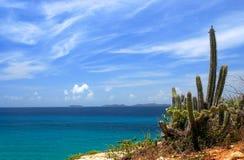 大西洋仙人掌海洋 免版税库存照片