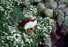 大西洋海鹦 免版税库存照片