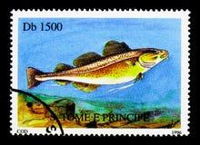 大西洋鳕鱼(Gadus morhua),鱼serie,大约1996年 库存照片