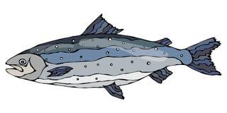 大西洋三文鱼红色鱼的图象 在一次白色背景手拉的乱画隔绝的现实传染媒介例证 免版税图库摄影