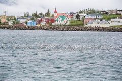 大西洋城,冰岛,鸟 库存照片