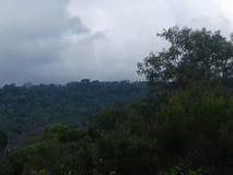 大西洋森林在Mairiporã 库存照片