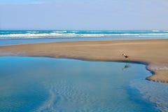 大西洋海滩在佛罗里达美国杰克逊维尔  免版税库存照片