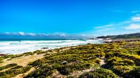 大西洋辗压的波浪到在好望角和Platboom之间的岸里靠岸 免版税图库摄影