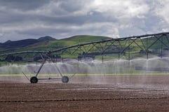 大规模奶牛场的灌溉系统 免版税库存图片