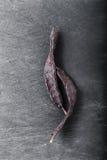大角豆树 免版税图库摄影