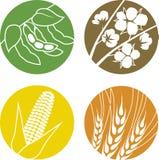 大豆、棉花、玉米和麦子 向量例证