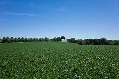 大豆和太阳能集热器 免版税库存图片