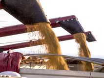 大豆收获和运输 库存照片