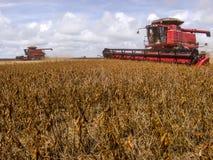 大豆收获 免版税库存图片