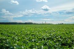 大豆种植园领域日落 图库摄影