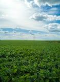 大豆种植园领域日落 库存图片