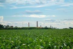 大豆种植园领域日落 免版税图库摄影