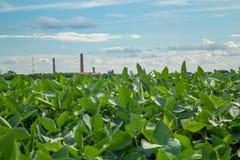 大豆种植园领域日落 库存照片
