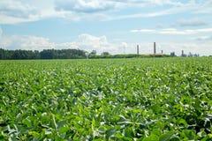 大豆种植园领域日落 免版税库存照片