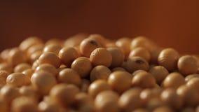 大豆自转的豆关闭 选择聚焦 影视素材