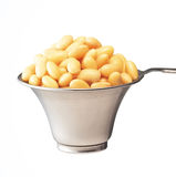大豆豆 免版税库存图片