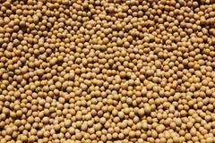 大豆豆 免版税图库摄影