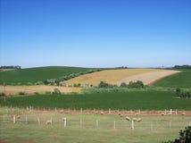 大豆领域在巴西,南里奥格兰德州 免版税库存照片