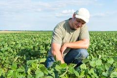 大豆领域的农夫 库存图片