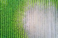 大豆领域顶视图在天旱期间的 免版税库存图片