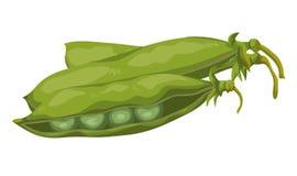 大豆 向量例证