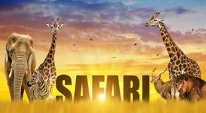 大象、长颈鹿、斑马和狮子在大草原在日落 免版税库存照片