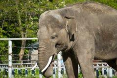 大象一点 库存图片