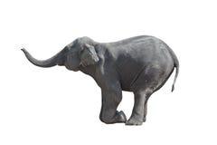 大象下跪了 免版税库存照片