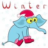 大象为什么在冬天是很冷的? 图库摄影