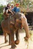 大象乘驾泰国 免版税库存图片