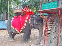大象乘驾,任何人? 库存图片
