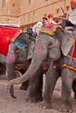 大象乘驾 免版税库存图片