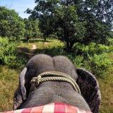 大象乘驾 库存照片