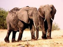 大象二个年轻人 免版税库存图片