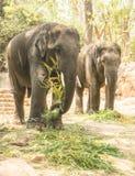 大象二 库存图片