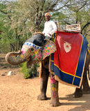 大象他的mahout 图库摄影