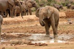 大象作用 免版税库存图片