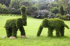 大象修剪的花园 免版税图库摄影