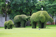 大象修剪的花园 免版税库存图片