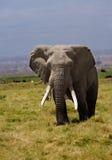 大象充电 免版税库存照片