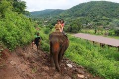 大象公园 图库摄影