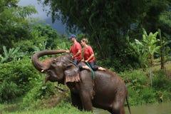 大象公园 库存图片