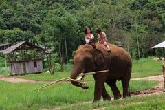 大象公园 库存照片